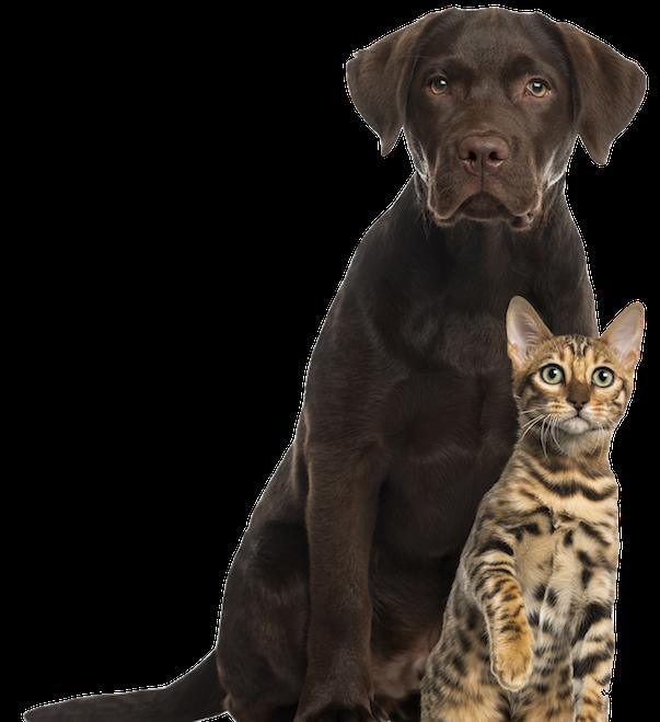 Arlington Humane Society – Dog Training & Obedience for